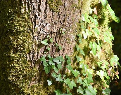 Forêt de Rescouré