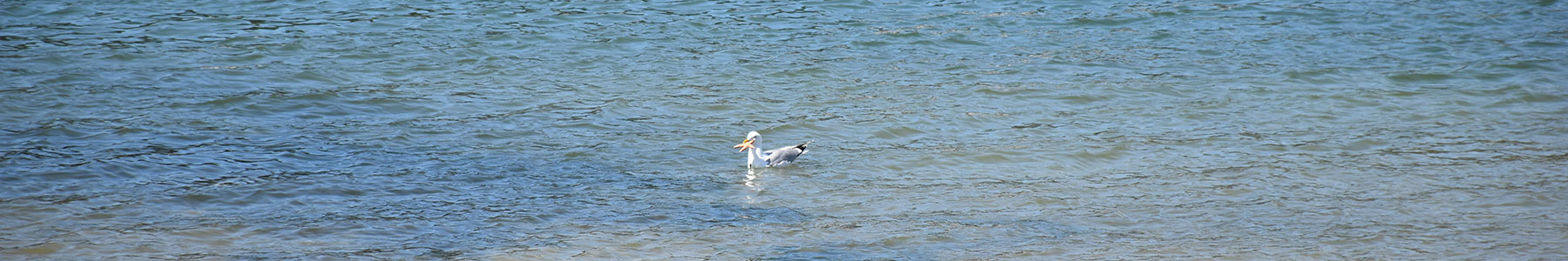 Pêche dans le port de Sainte-Marine